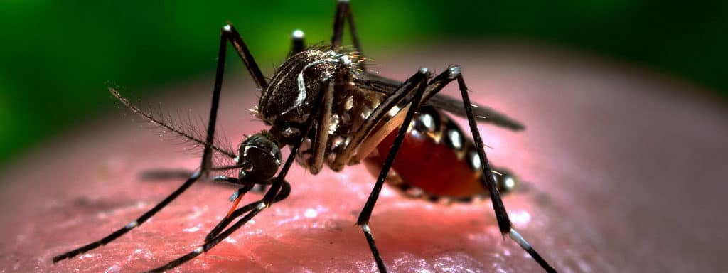 Dengue-In-bangladesh